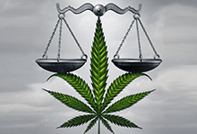 DAGGA – ARREST RISK REMAINS