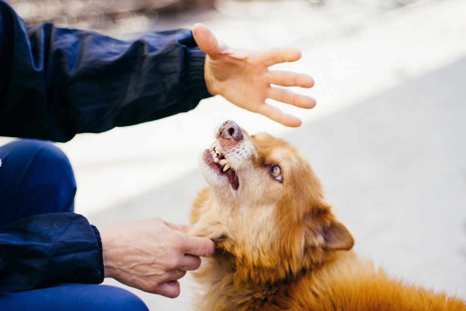 Does Your Dog Bite? Your (Substantial) Risk Remains